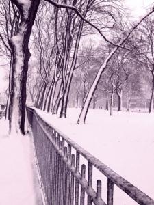 AMNH snow
